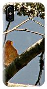 Hook Winged Butterfly IPhone Case