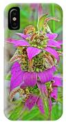 Horsemint On Trail To North Beach Park In Ottawa County, Michigan IPhone Case