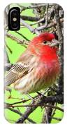 House Finch - 3 IPhone Case