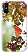 House Finch Hanging Around IPhone X Case