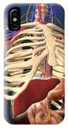 Human Skeleton Showing Digestive System IPhone Case