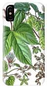 Humulus Lupulus, Common Hop Or Hop IPhone Case