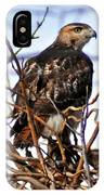 Hunting Red-tailed Hawk IPhone Case