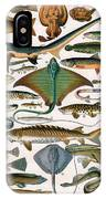 Illustration Of Ocean Fish IPhone Case