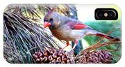 Img_0311 - Northern Cardinal IPhone Case