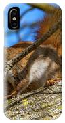 Inquisitive Squirrel IPhone Case