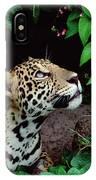Jaguar Panthera Onca Peeking IPhone Case