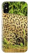 Jaguar Prowls The River's Edge IPhone Case