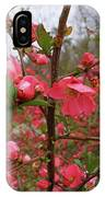 Japanese Quince IPhone Case