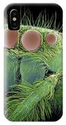 Jumping Spider, Sem IPhone Case