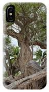 Kiawe Tree IPhone Case