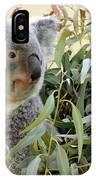 Koala Bear I IPhone Case