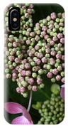 Lacecap Hydrangea Macro IPhone Case