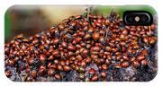 Ladybugs On Branch IPhone Case