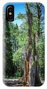 Lake Tahoe Tree IPhone Case