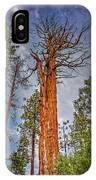 Lake Tahoe Trees On 89  IPhone Case
