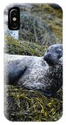 Large Harbor Seal Colony In Scotland IPhone Case