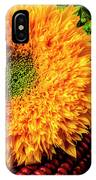 Large Sunflower On Indian Corn IPhone Case