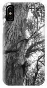 Large Tree IPhone Case
