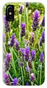 Lavender At Pilgrim Place In Claremont-california IPhone Case