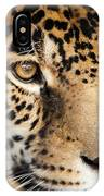 Leopard Face IPhone Case by John Wadleigh