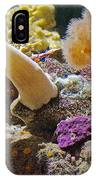 Life Under The Sea In Monterey Aquarium-california IPhone Case