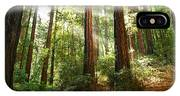 Light The Way - Redwood Forest Of Muir Woods National Monument With Sun Beam. IPhone X Case