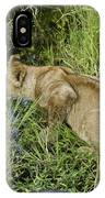 Lion In A Cool Glade IPhone Case
