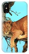 Lioness In Africa IPhone Case