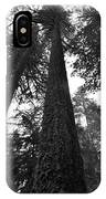 Lofty Tree IPhone Case