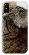 Look Out Window Tabby Cat IPhone Case