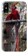 Macaw Guatemala IPhone Case