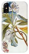 Magnolia Glauca IPhone Case