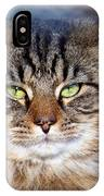 Maine Coon I IPhone Case
