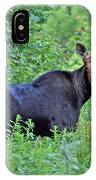Maine Moose IPhone Case