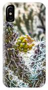 Many Stems Of Poky Small Cactus In Desert IPhone Case