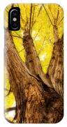Maple Tree Portrait 2 IPhone Case