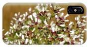 Marsh Blooms IPhone Case