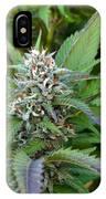 Medicinal Marijuana Growing IPhone Case