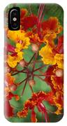 Mexican Bird Of Paradise IPhone Case