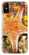 Mexico, Gulf Sea Star IPhone Case