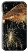 Milkweed Pod IPhone Case