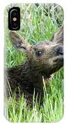Moose Baby IPhone Case