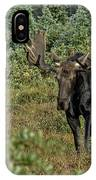 Moose In Shrubs IPhone Case