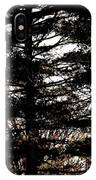 Morning Sunlight Through The Pines IPhone Case
