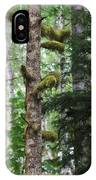 Moss-draped Trees On Tiger Mountain Wt Usa IPhone Case
