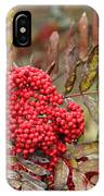 Mountain Ash With Berries IPhone Case