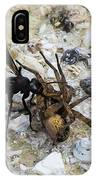 Mud Dauber Wasp And Prey IPhone Case
