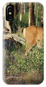 Mule Deer Doe And Fawn IPhone Case