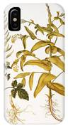 Mustard Plant, 1613 IPhone Case